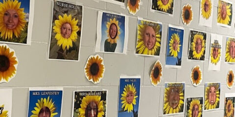 Atwood Sunflowers